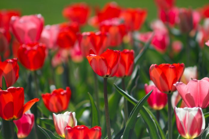 Vesecký: Čeští květináři jsou dobří pěstitelé, ale marketing jim zatím nic neříká